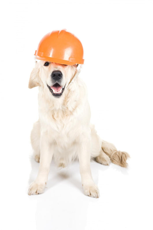 Construction dog Wall Decal