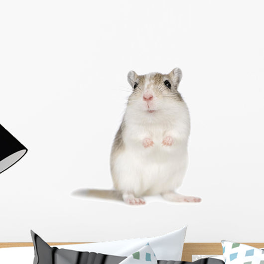 Gerbil Wall Decal