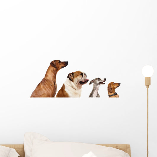 group of dogs  looking up Wall Decal