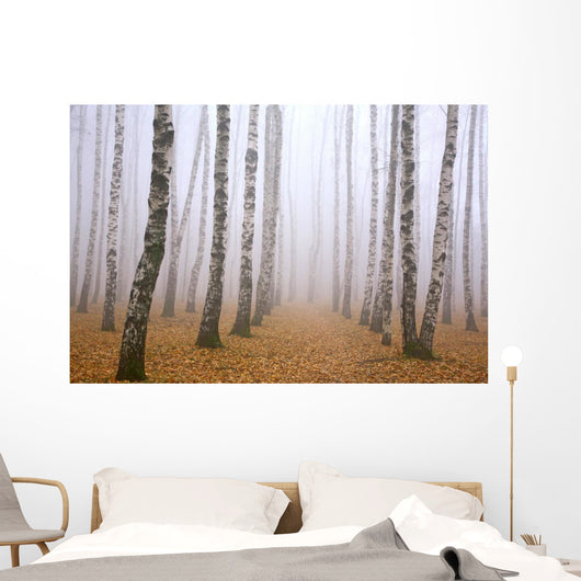 Pathway in mist birch grove Wall Mural