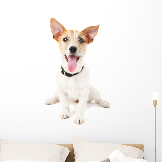 Funny little dog Jack Russell terrier, isolated on white Wall Decal