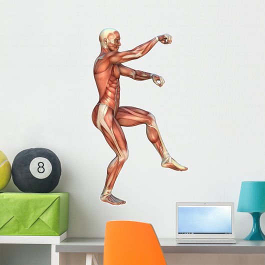 Muscle Maps Anatomy Wall Decal