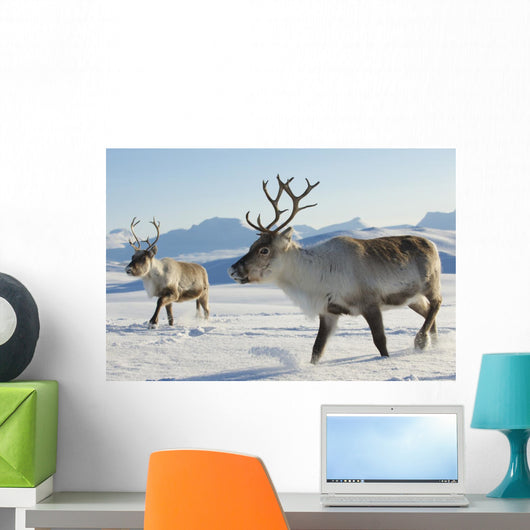Reindeers Northern Norway Wall Mural