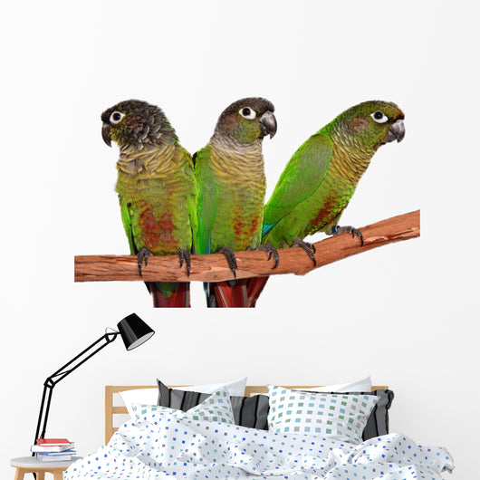 Green Cheek Conure Wall Decal