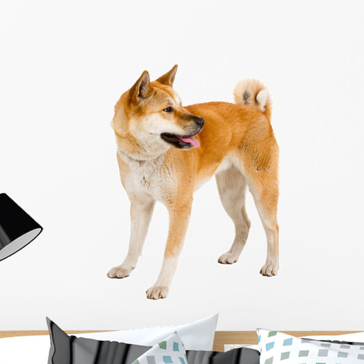 Akita Inu Dog Wall Decal