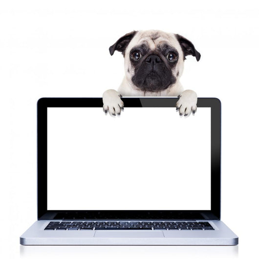computer dog Wall Decal