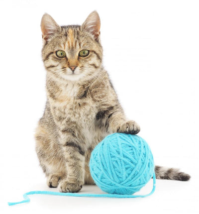 Cat with ball of yarn Wall Decal
