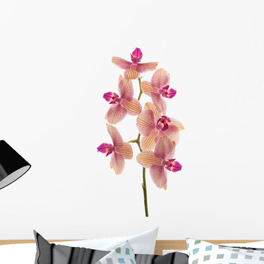 Branch Orchid Flowers White Wall Decal Design 4