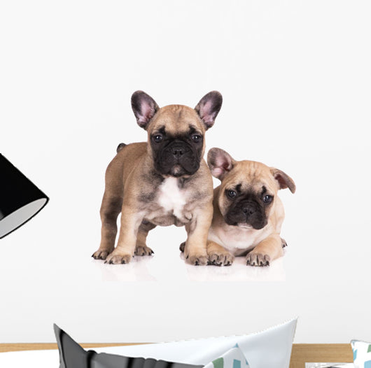 French Bulldog Puppies Wall Decal Design 3