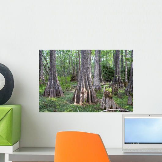 Big Cypress National Preserve Wall Decal