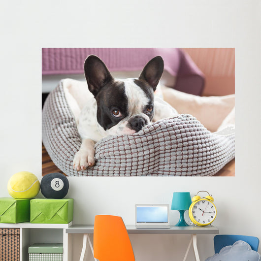Adorable French Bulldog Lair Wall Decal
