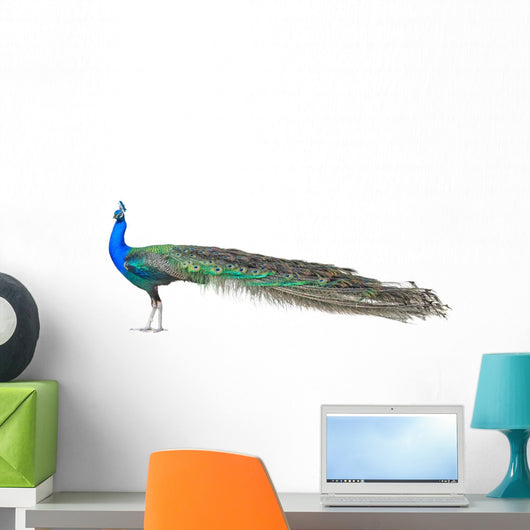 Beautiful Male Indian Peacock Wall Decal