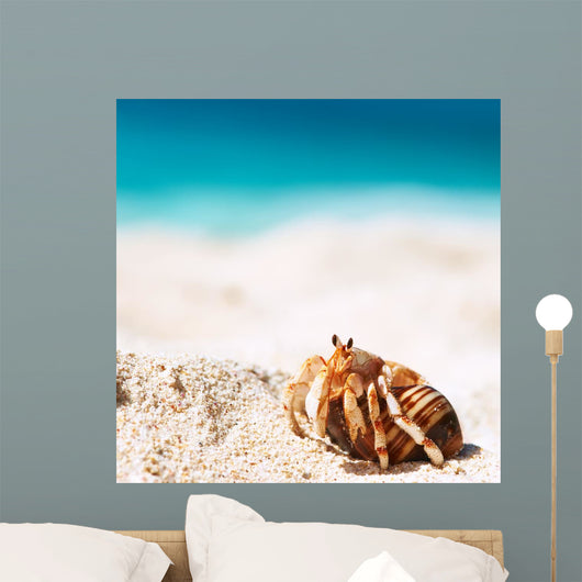 Hermit Crab Beach Wall Decal