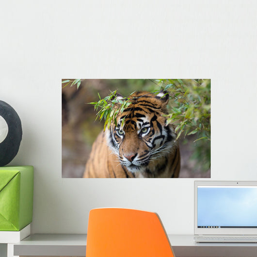 Sumatran Tiger Wall Decal