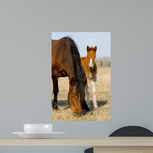 Adult and Young Horse Wall Decal