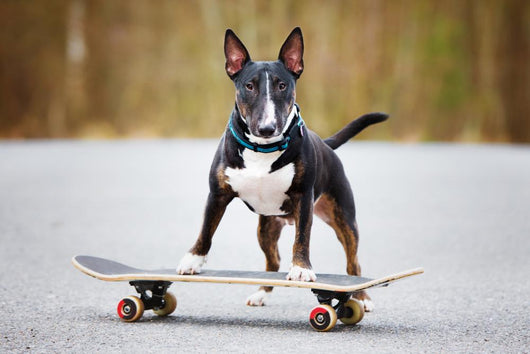 Dog Skateboard Wall Decal
