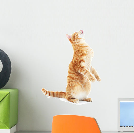 Begging Red Cat Wall Decal