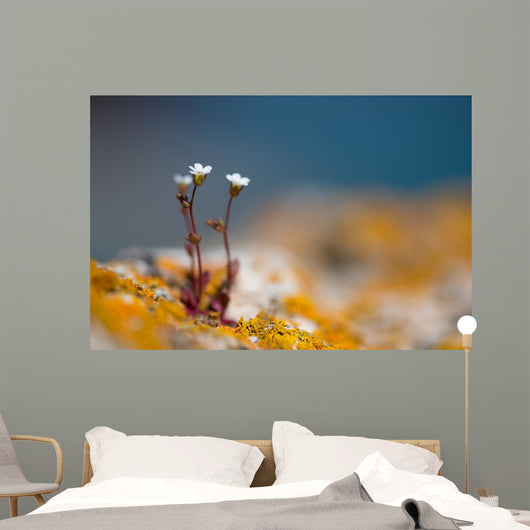 Wild White Rock Flowers Wall Decal