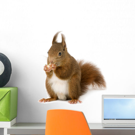 Eurasian Red Squirrel Sciurus Wall Decal