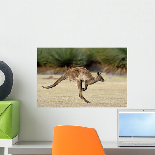Kanguru Beim H Pfen Wall Decal