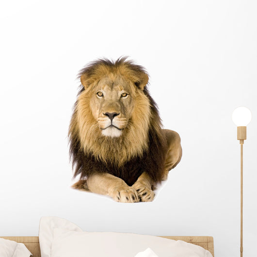 Male Lion Laying Down Wall Decal