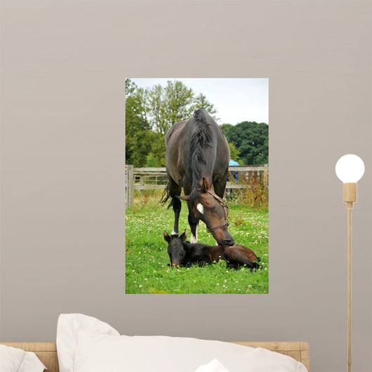 Horse and One Day Wall Decal