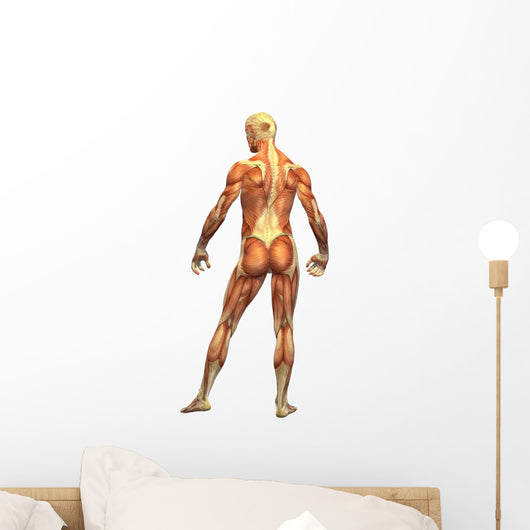 Human Body Muscle Male Wall Decal