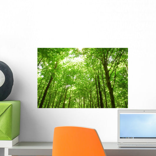 Sunlight Trees Green Forest Wall Decal