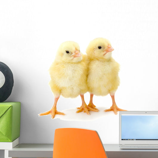 Pair Newborn Yellow Chickens Wall Decal