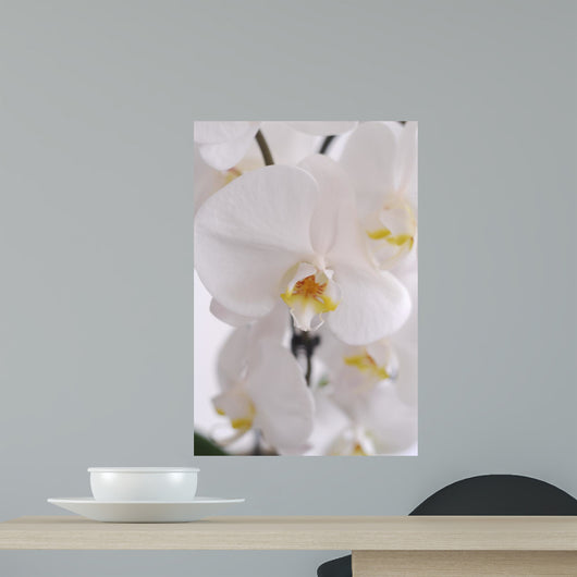 Blhende Orchidee Wall Decal