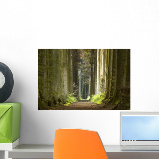 Nature Pathway Wall Decal
