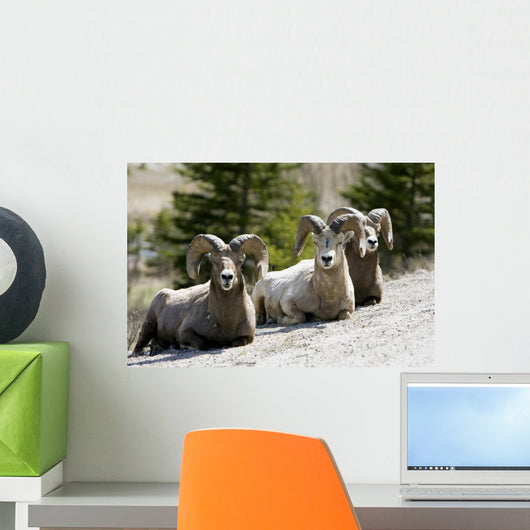Big Horn Sheep Wall Decal