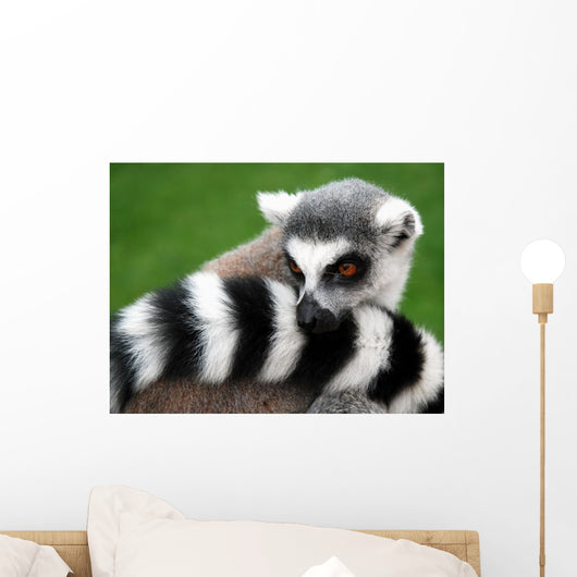 Lemur Animal Wall Decal