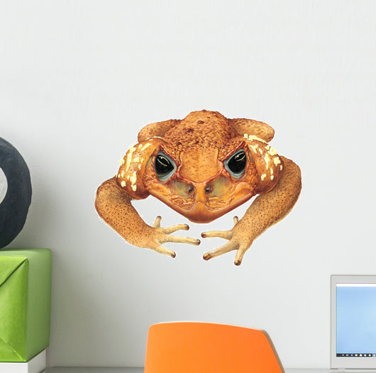 Animal Decals - Cane Toad Wall Decal