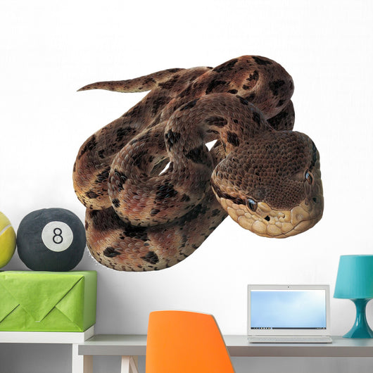 Pit Viper Snake Wall Decal