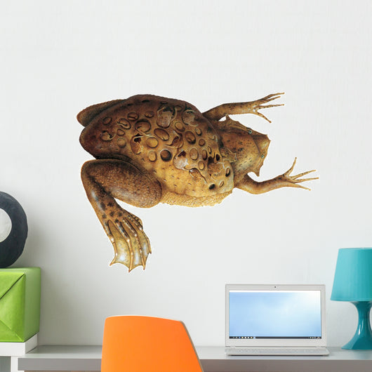 Pipa Toad Wall Decal