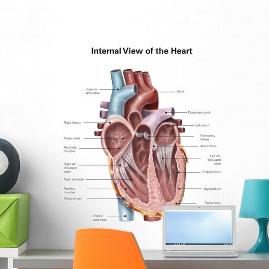 Internal Human Heart Wall Mural