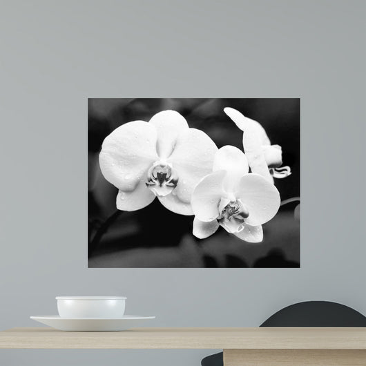 White Orchids Wall Mural