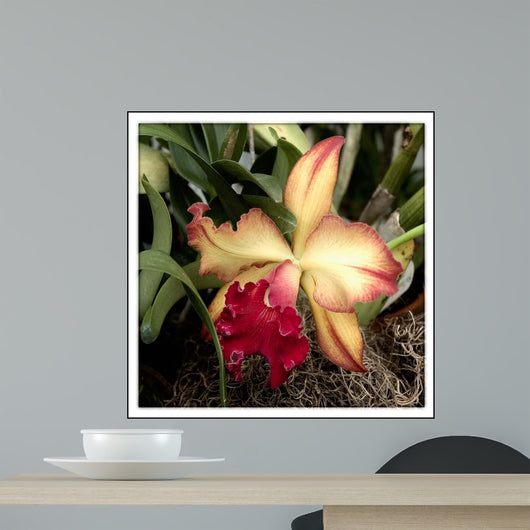 Silky Red Orchid Wall Mural