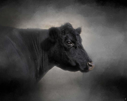 Portrait Of The Black Angus Wall Mural