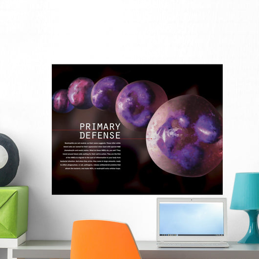 3D Illustration Hematopoiesis White Labeled Wall Decal