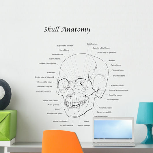 Line Illustration Human Skull Labeled Wall Decal