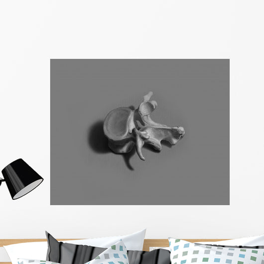 Vertebrae Illustration Gray Wall Decal