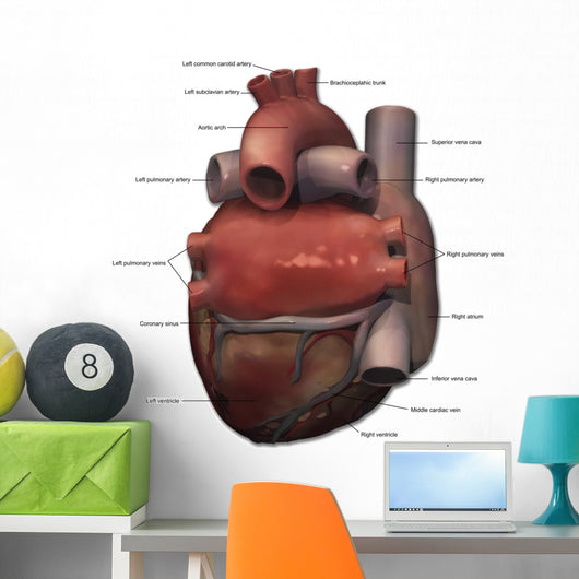 Posterior Human Heart Anatomy Wall Decal