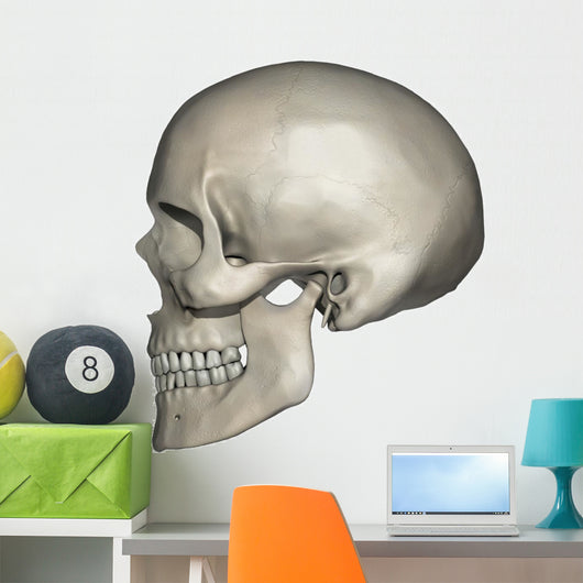 Lateral Human Skull Anatomy Wall Decal