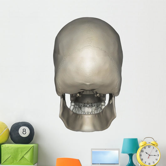 Posterior Human Skull Anatomy Wall Decal