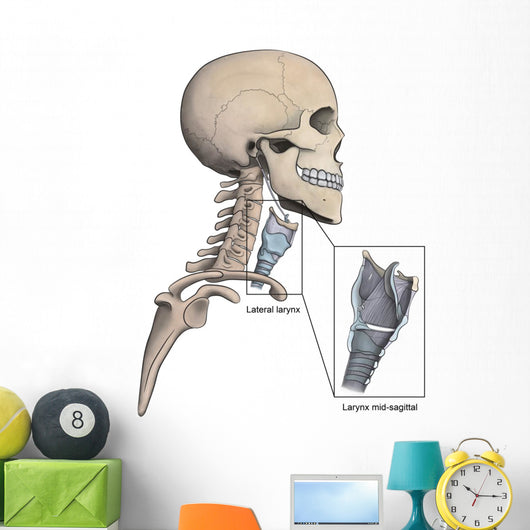 Lateral Larynx and Skeletal Wall Decal