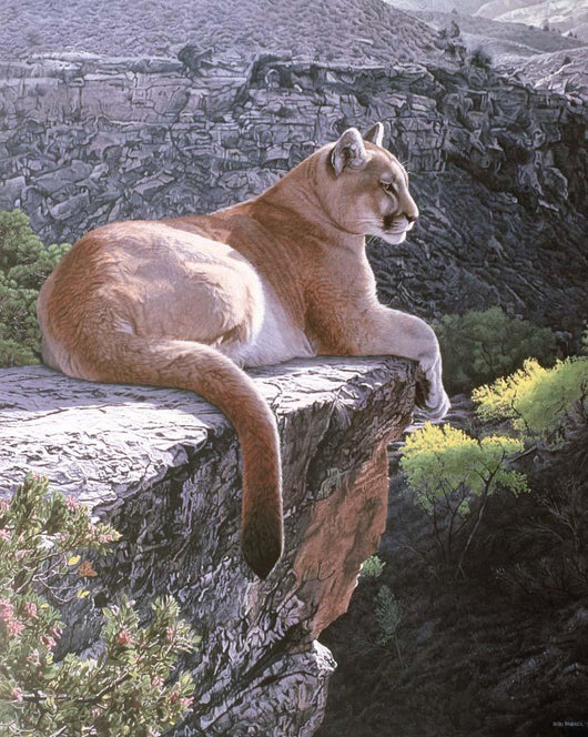 Cougar Country Wall Mural