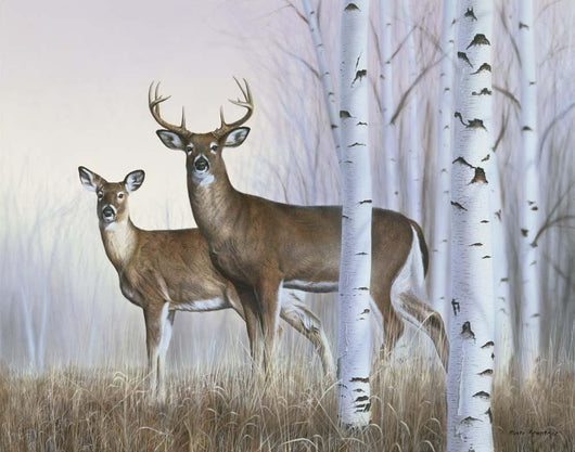 Deer In Birch Woods Wall Mural