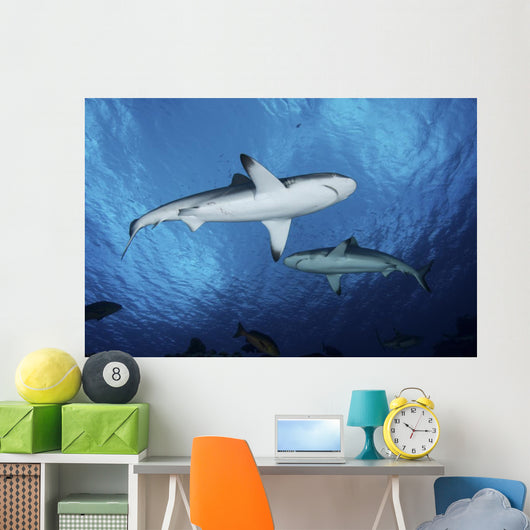 Two Grey Reef Sharks Yap Wall Decal